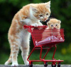 Mama taking baby for a ride. Memes Cats Sitting Like Humans | fotos-engracadas-de-animais-08.jpeg