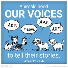 How do you help be a voice for the voiceless?