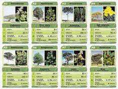 Super Trunfo Árvores Brasileiras / Meio Ambiente / Prof. Deidimar Alves Brissi
