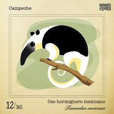 Bichos Mexicanos - Vectores de la fauna mexicana on Behance Mexico Tattoo, Hispanic Art, Fauna, Wildlife Art, Animal Kingdom, Character Design, Symbols, Cartoon, Wall Art