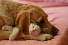 犬猫合体でかわいさが加速する、犬と猫が一緒にお昼寝画像特集 : カラパイア