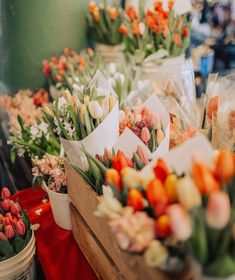 Tulips photography spring. Subscribe to our news - #ZNOVANNA and to our Board of Beautiful Things! https://www.pinterest.com/znovaanna/beautiful-things/