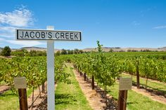 Jacobs Creek vineyard Sealink_Barossa