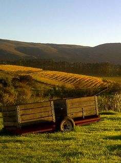 Glorious autumn ~ La Vierge Wines