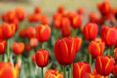Frühlingsfest: Celebrate Spring the German Way :: Sosh :: Washington, DC