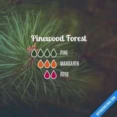 Pinewood Forest - Essential Oil Diffuser Blend