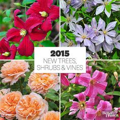 See our editors' picks for the best new shrubs for 2015 here: http://www.bhg.com/gardening/gardening-trends/new-trees-shrubs-and-vines-for-2015/?socsrc=bhgpin041215bestshrubs