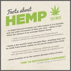 Growing hemp. It's Refertilization properties are one of a kind as well. It is the ONLY plant that doesn't deplete the soil. In fact, it does the opposite.