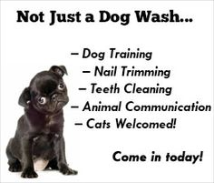The only groomer lulu loves they also have a self serve wash for they also have a self serve wash for when im on a budget furbabies pinterest solutioingenieria Gallery
