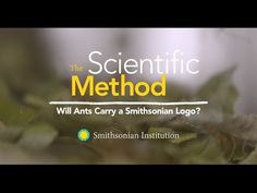The Scientific Method: Will Ants Carry a Smithsonian Logo? - YouTube