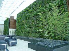 Green Wall   Flickr - Photo Sharing!