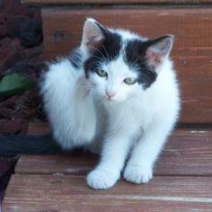 Bathe Pets With Dawn to Kill Fleas