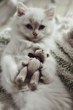 cute kitten with teddy bear//