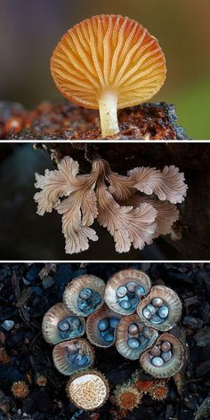 Australian fungi come in countless shapes, sizes, colors, and textures — diversity that photographer Steve Axford captures in his photos. Mushroom Art, Mushroom Fungi, All Nature, Amazing Nature, Wild Mushrooms, Stuffed Mushrooms, Mushroom Pictures, Plant Fungus, Patterns In Nature