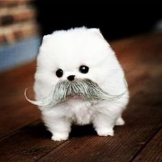 Adorable, I love the mustache. pic.twitter.com/plUC9ncHTC