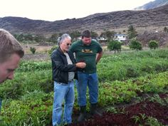 Ma'o Farm in Waianae, Oahu, produces baby vegetables and educates kids at the same time.