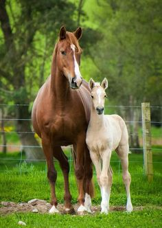 Adorable mare and foal. I love the creamy color of the baby horse. #babyhorses