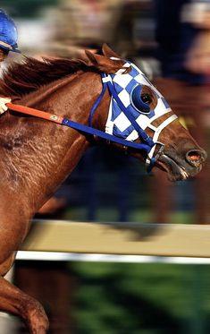 Belmont Stakes Mixed Media - Secretariat, Preakness Stakes by Thomas Pollart Pretty Horses, Beautiful Horses, Animals Beautiful, Derby Horse, Ky Derby, Royal Animals, Preakness Stakes, Arte Cyberpunk, Majestic Horse