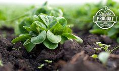 Lidl, Food Facts, Succulents, Plants, Pomegranate, Harvest, Flora, Succulent Plants, Plant