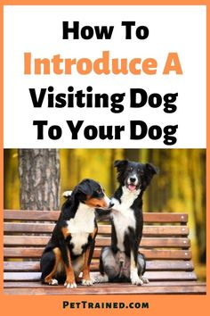 Here's how to introduce a to dogs teh right way quickly and easily. A proper introduction is a necessary step before you allow the dogs to spend some time together. Even though you will be introducing your pet to a potential friend, he'll see the visiting dog as a stranger and may become aggressive without a proper introduction. This will help prevent disagreements. Learn how to introduce a visiting dog to your dog. #DogTips #IntroduceDogs #PreventDogFighting #TwoDogs #Friend #DogOwner Dog Health Tips, Cat Health, Living With Dogs, Dog Fighting, Two Dogs, Dog Care Tips, Happy Animals, Health And Safety, Cat Breeds