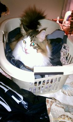 My Bella sitting on the clean clothes.