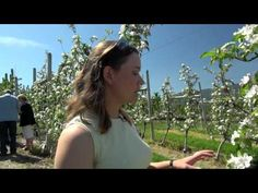 Tour an Ambrosia Apple Orchard! They sure know how to pick-em! Blue Apron, Apple Orchard, Love Of My Life, Apples, Organic, Tours, Videos, Apple
