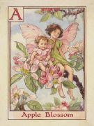 Apple Blossom Fairies - Cicely Mary Barker