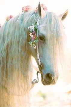 Pretty white horse with flowers