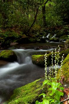 Untitled by Rob Travis stream and flowers