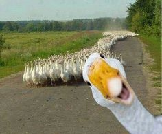 HI MOM! LOL! - The Rebel, breaking away from the pack!