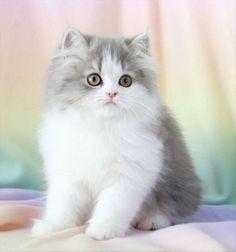 Love cats :)