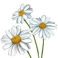 Illustration about Daisy vector illustration hand drawn painted watercolor. Illustration of illustration, country, blooming - 52178045 Daisy Flower Drawing, Daisy Art, Flower Sketches, Drawing Sketches, Flower Art, Art Drawings, Drawing Flowers, Daisy Daisy, Daisy Painting