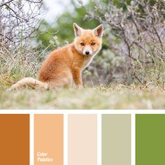 Color Palette Orange colour which is considered to be the colour of autumn, also will fit perfectly late spring and early summer. This palette will fit spring type gir. Scheme Color, Colour Pallette, Color Palate, Colour Schemes, Color Combos, Color Patterns, Pantone, Orange Color Palettes, Design Seeds