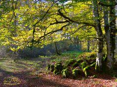 Otoño en el Parque Natural de Urbasa, Navarra