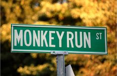 You'd Better Do a #Monkey Run. #FunnySigns #MonkeyRun #StreetSign #Michigan