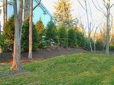 Landscaping for Priv