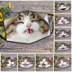 Cat Clothing, Cats, Animals, Gatos, Animales, Kitty Cats, Animaux, Cat, Animal