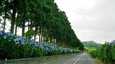 Azores - São Miguel