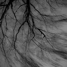 Wind in the Willow 002