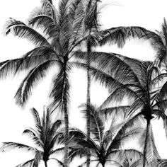 Palms Pencil Drawing on The Loop