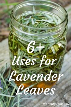 Lavender leaves not only smell delightful, but they have so many uses! From food to personal care, you will definitely want to gather some lavender and try out some of these recipes! # Uses for Lavender Leaves Healing Herbs, Medicinal Plants, Natural Medicine, Herbal Medicine, Herbal Remedies, Natural Remedies, Health Remedies, Lavender Leaves, Lavender Garden