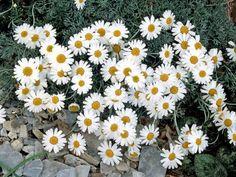 Nothing gets the gardening juices flowing like a sneak peek of spring flowers.