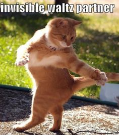 Cats with Invisible Things