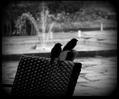 #birds #photography #water #blackandwhite #style