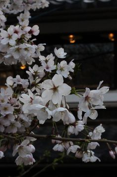 Kyoto, Japan 御射山公園  (Photo : Gallery I) https://www.facebook.com/Kyoto.GalleryI