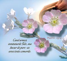 Versete de Aur : 01.11.2013 - 01.12.2013 Aur, Faith, Birthday, Floral, Flowers, Study, Diamond, Bible, Birthdays