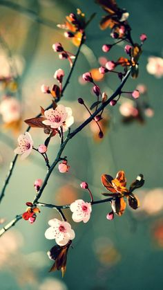 Ideas spring nature photography ideas cherry blossoms for 2019 Beautiful Flowers Wallpapers, Beautiful Nature Wallpaper, Pretty Wallpapers, Flor Iphone Wallpaper, Wallpaper Backgrounds, Wallpaper For Cell Phone, Foto Poster, Spring Nature, Flower Aesthetic