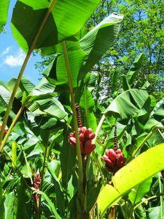 Naturaleza viva en el Jardin Botanico.