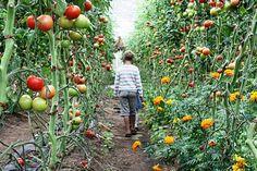 garden to walk through