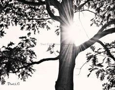 tree & sunshine